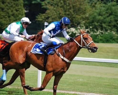 Race Horse Category
