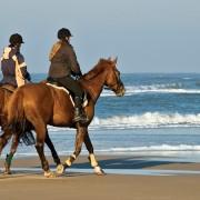 馬具乗馬用品サジタリアスリニューアル
